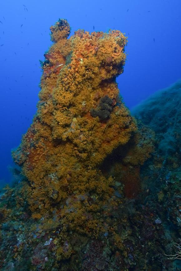 mmersione secca del picco giallo isola d' elba
