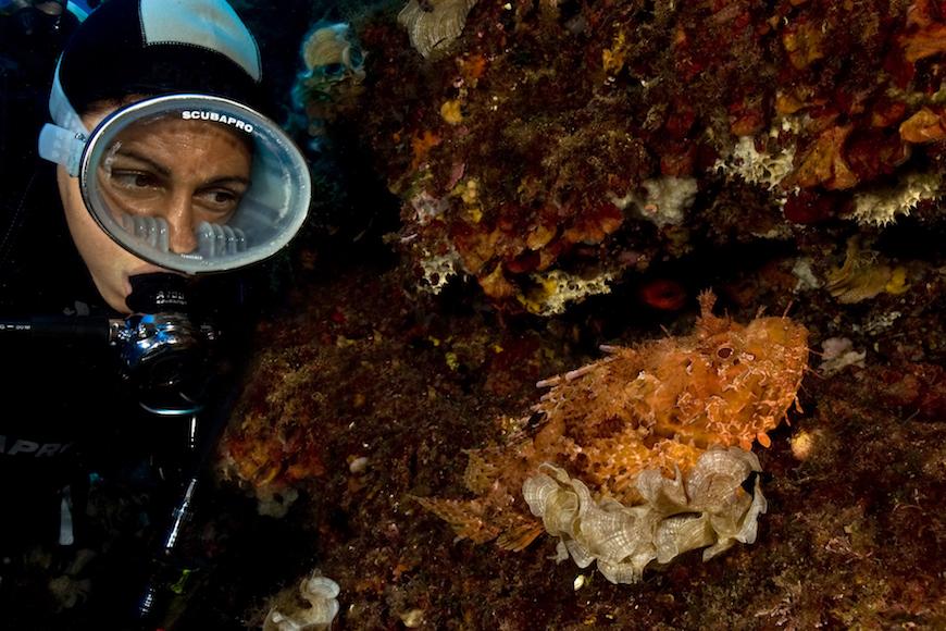 secca di santa lucia immersione isola d' elba