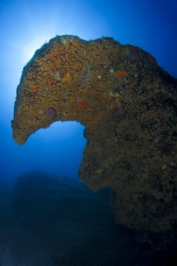 immersione formiche della zanca isola d' elba