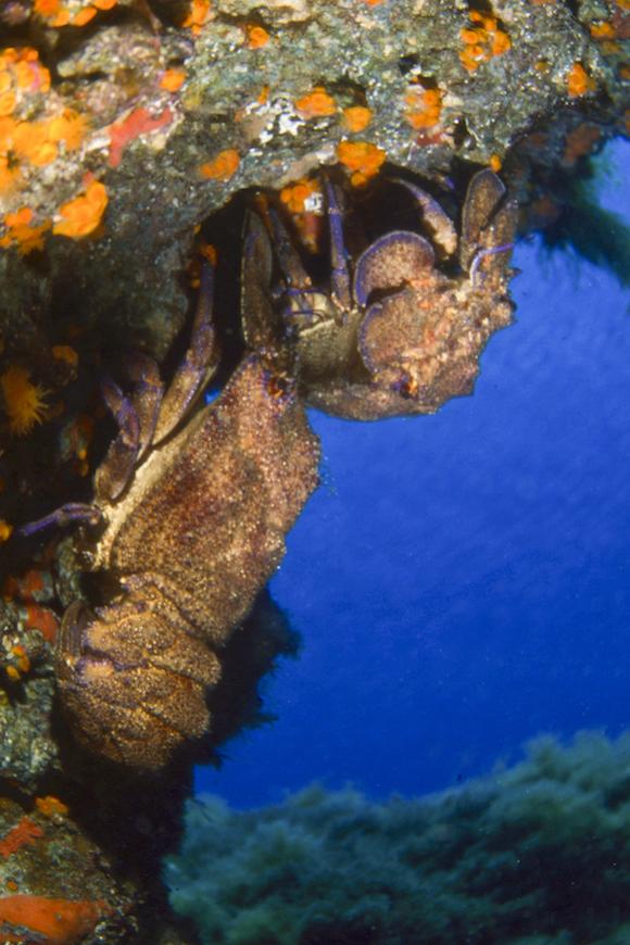 scoglietto di portoferraio la franata immersione isola d' elba