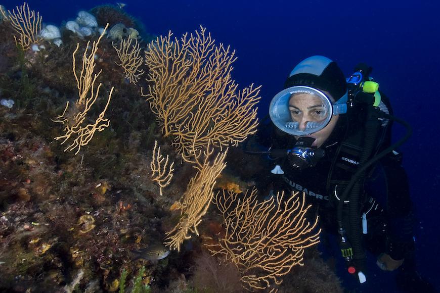 immersione punta della madonna isola d' elba