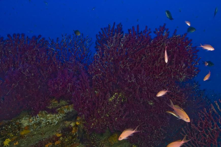 immersione punta della zanca isola d' elba