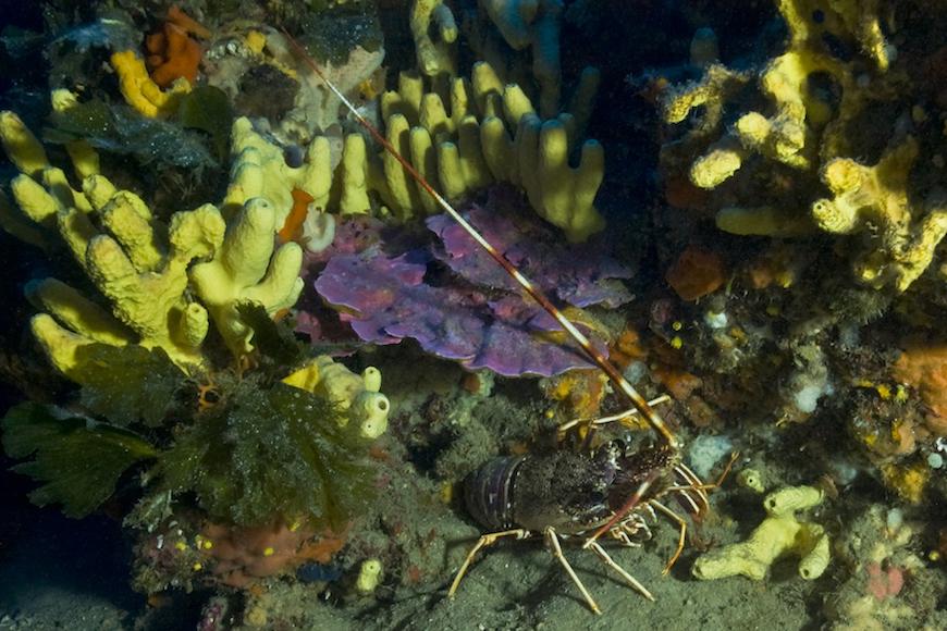 immersione punta di fetovaia isola d' elba