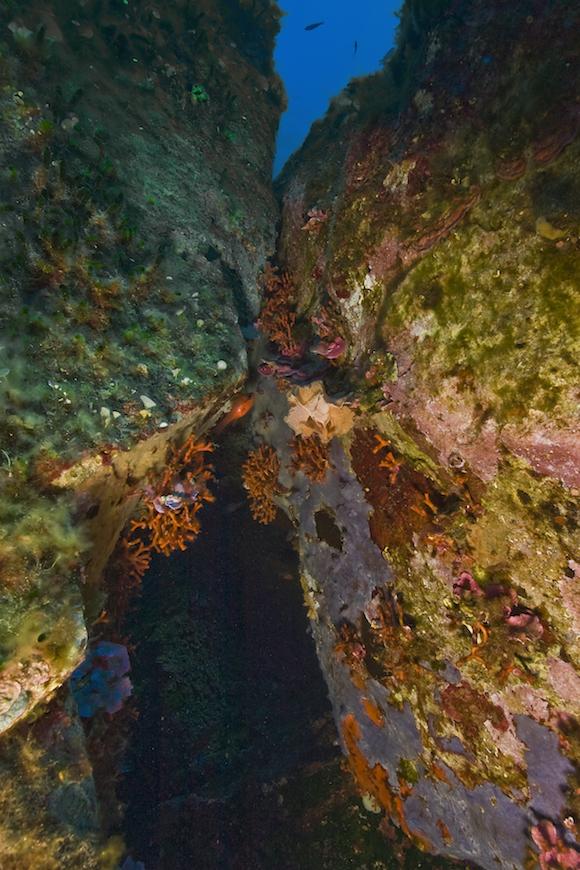 immersione scoglio fine isola d' elba