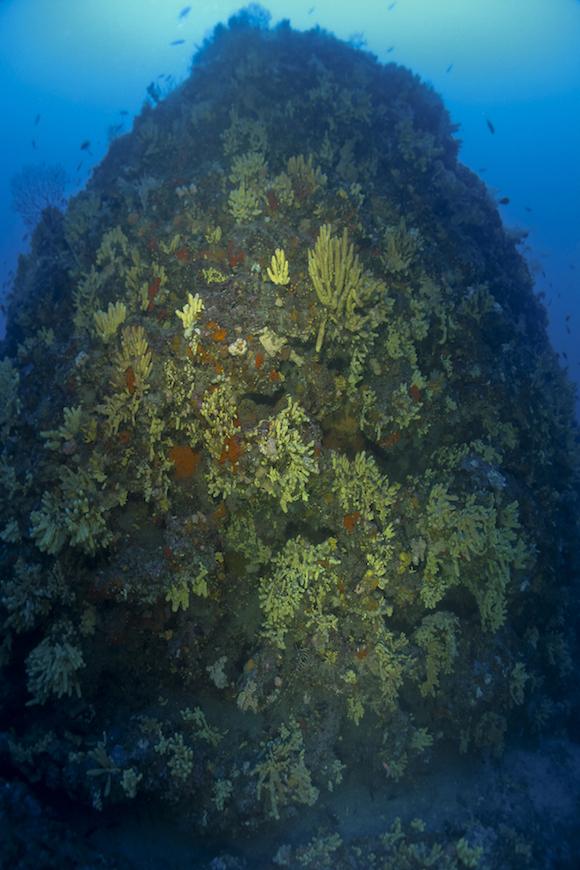 immersione secca dei coravalli isola d' elba