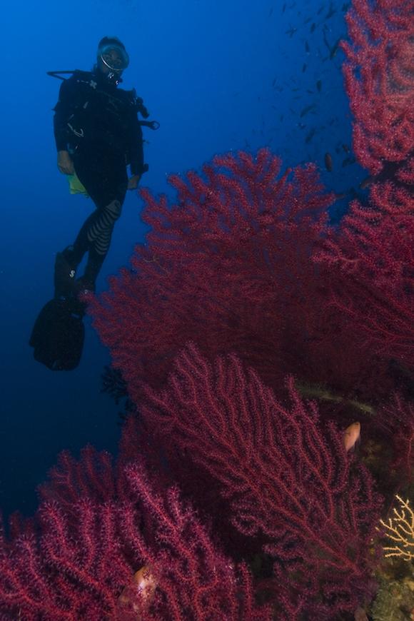 immersione secca del semaforo isola d' elba