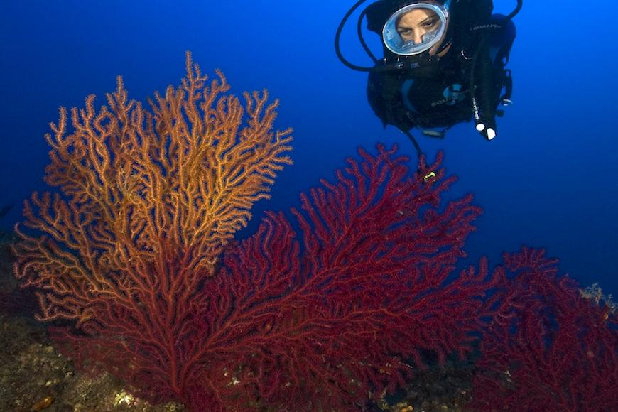 immersione secca di fetovaia isola d' elba